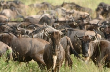 Great Migration viewing at andBeyond Serengeti Under Canvas