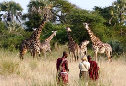 Guests at Chem Chem lodge on a Slow Safari - observing giraffe up close on foot