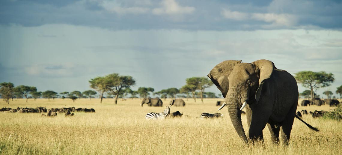 Game drives at Singita Grumeti bring guests close to an abundance of animals in the Serengeti