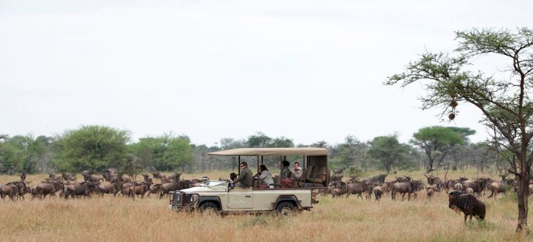 Wildebeest on a Great Migration luxury African safari (courtesy Singita Grumeti)