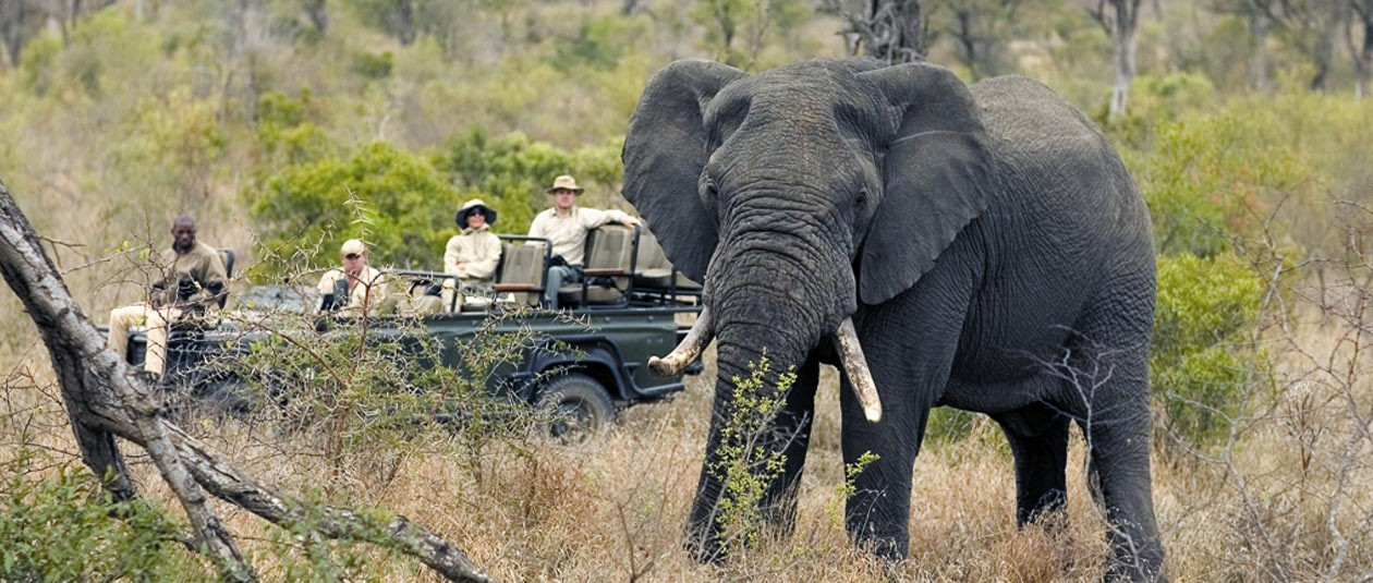 Elephant on safari at Singita Sabi Sands, Greater Kruger National Park South Africa