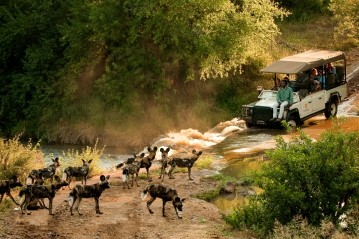 Guests at Morukuru in Madikwe game reserve observing a pack African Wild Dog