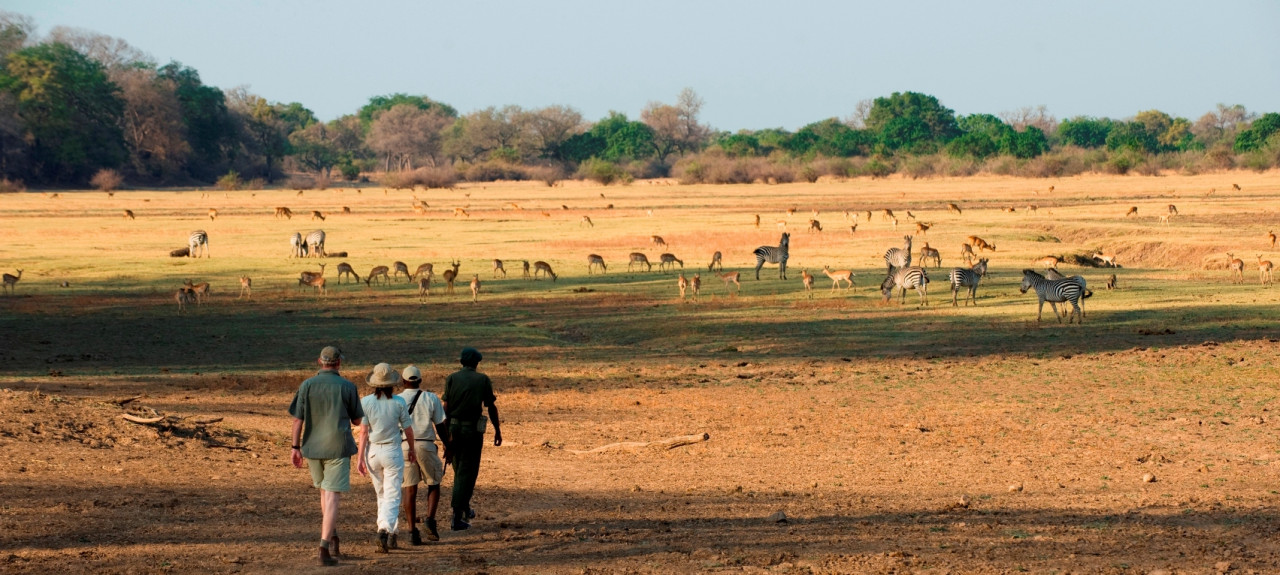 Guests at Puku Ridge Camp on a walk in the South Luangwa National Park